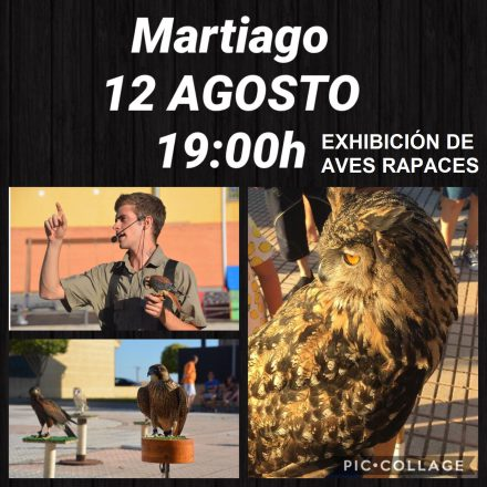 Exhibición aves rapaces